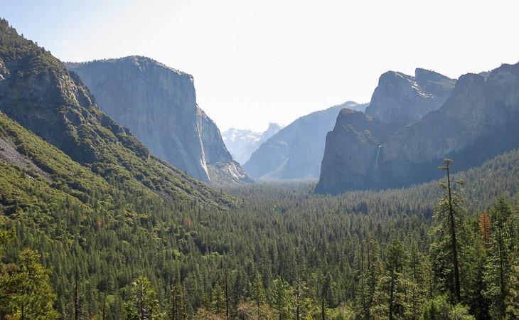 Into the Wild: Yosemite NP