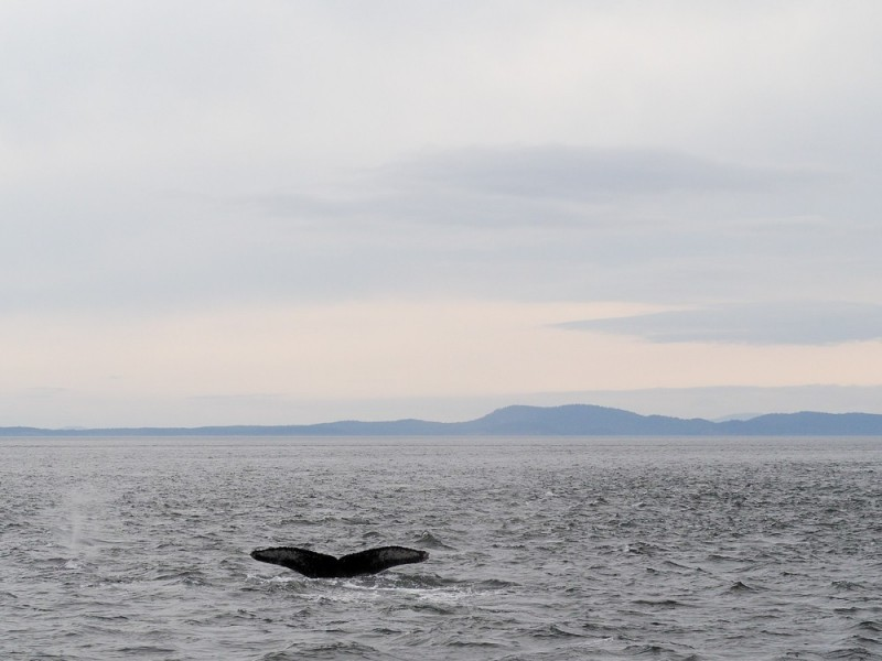 Canada Victoria Vancouver Island Road Trip Whale Watching Eagle Wings Tours