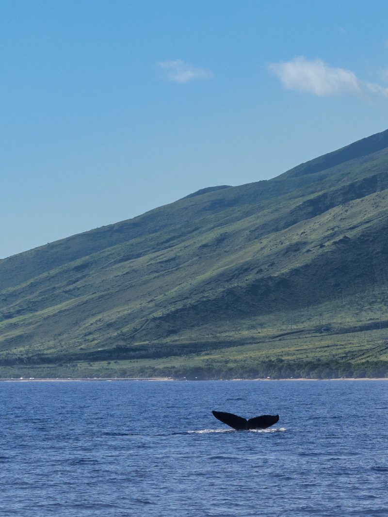 Maui Hawaii Whale Watching Coast Travel