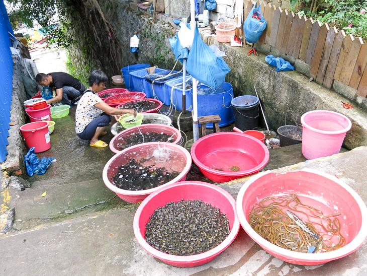 China Travel Yangshuo Street Scene