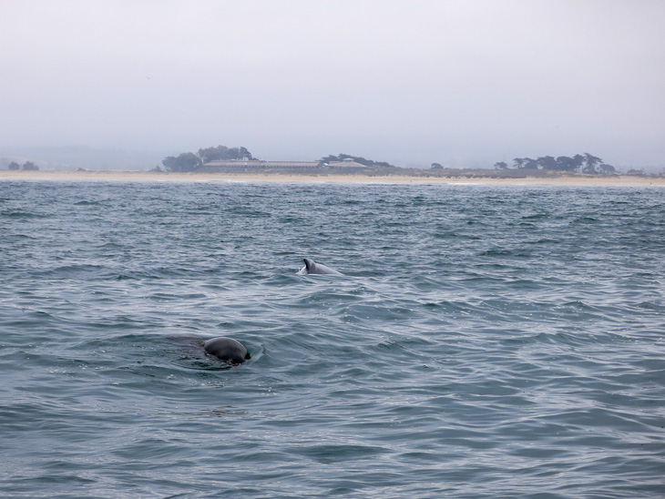 USA California Pacific Coast Highway Road Trip Monterey Whale Watch