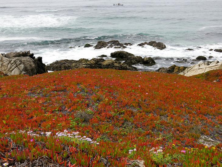 USA California Pacific Coast Highway Road Trip Carmel Pebble Beach