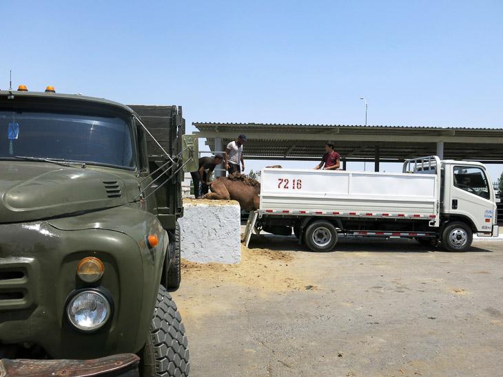 Altyn Asyr camel market Ashgabat Turkmenistan