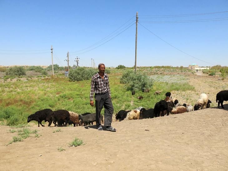 Sheep herder Merw Turkmenistan