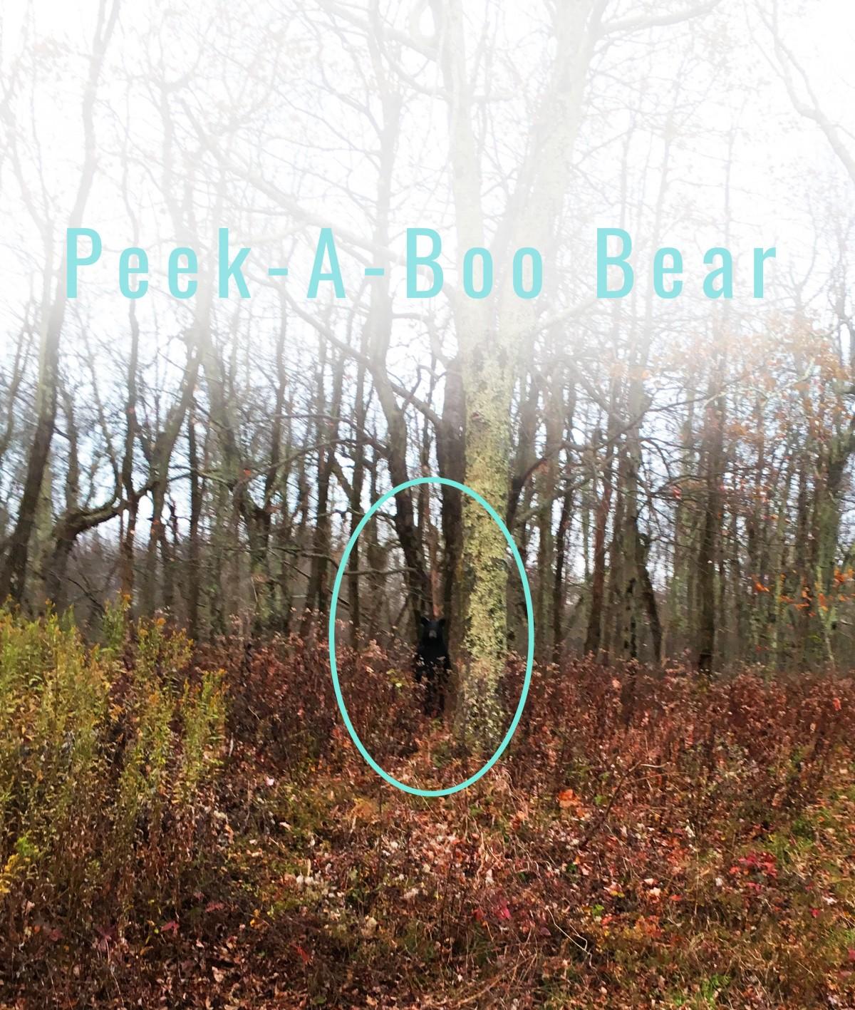 Bear Fall Peak Foliage Indian Summer USA Honeymoon Road Trip