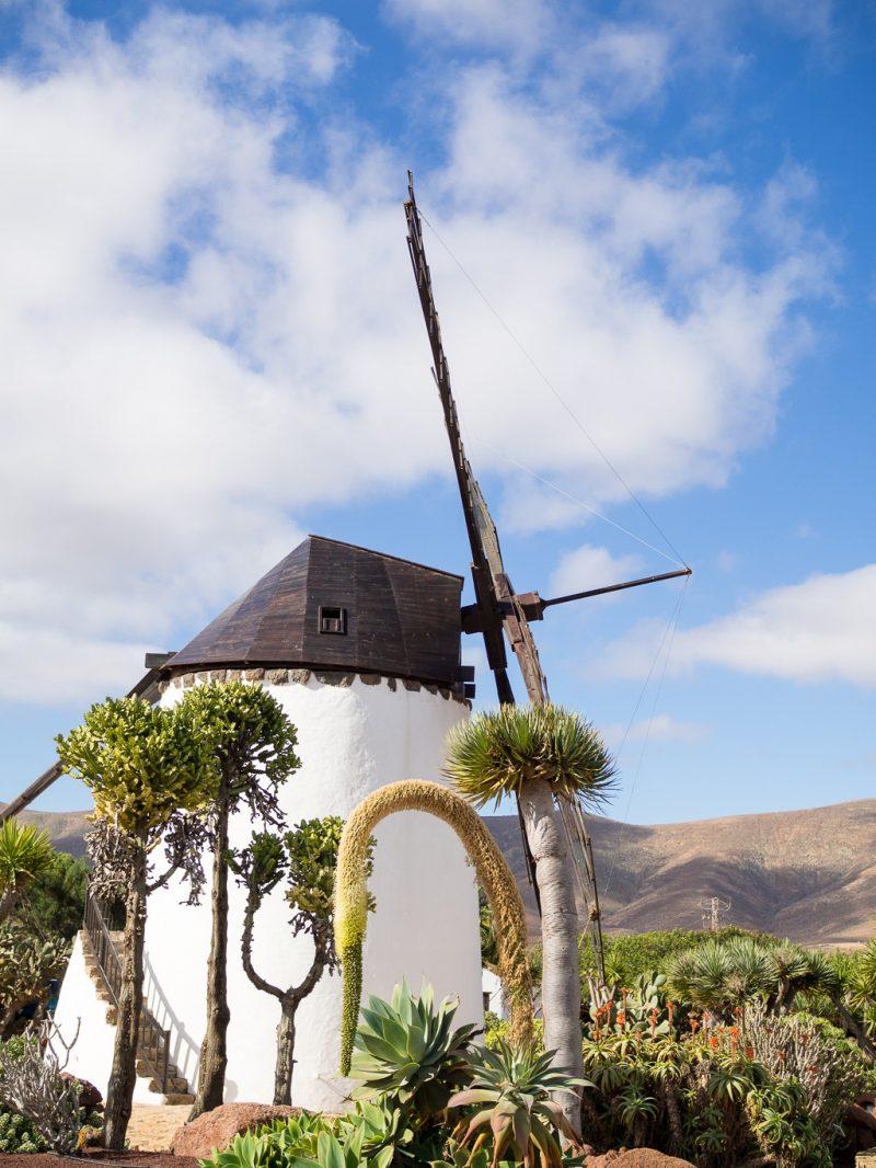 Fuerteventura surfing travel canary islands Windmill Antigua