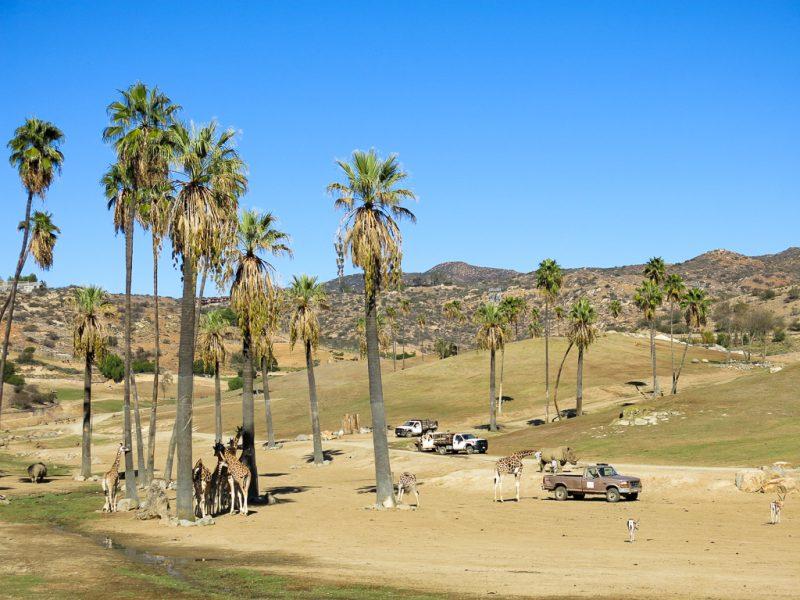 Travel San Diego California USA Safari Park